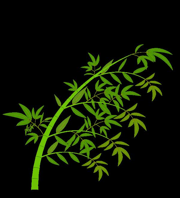 笹の葉と枝のイラスト7
