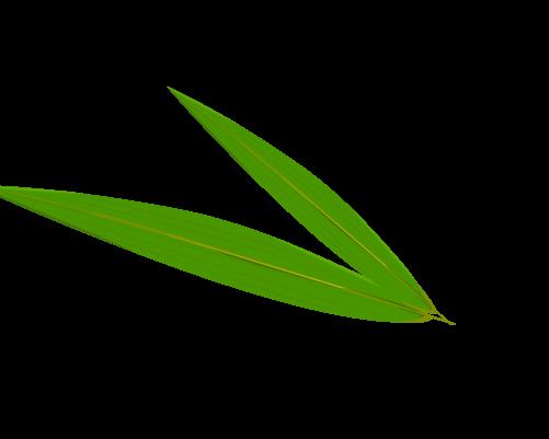 笹の葉のイラスト5