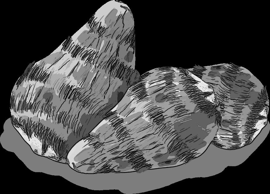 白黒の里芋のイラスト