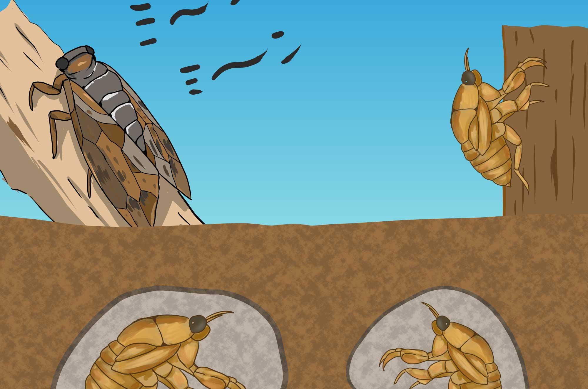 セミのイラスト - 土の中の幼虫と羽の生えた成虫