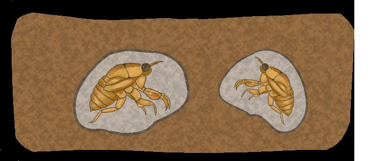 土の中にいるセミの幼虫のイラスト