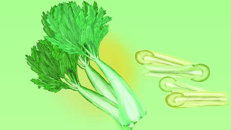 セロリのイラスト - 爽やか新鮮な野菜のフリー素材