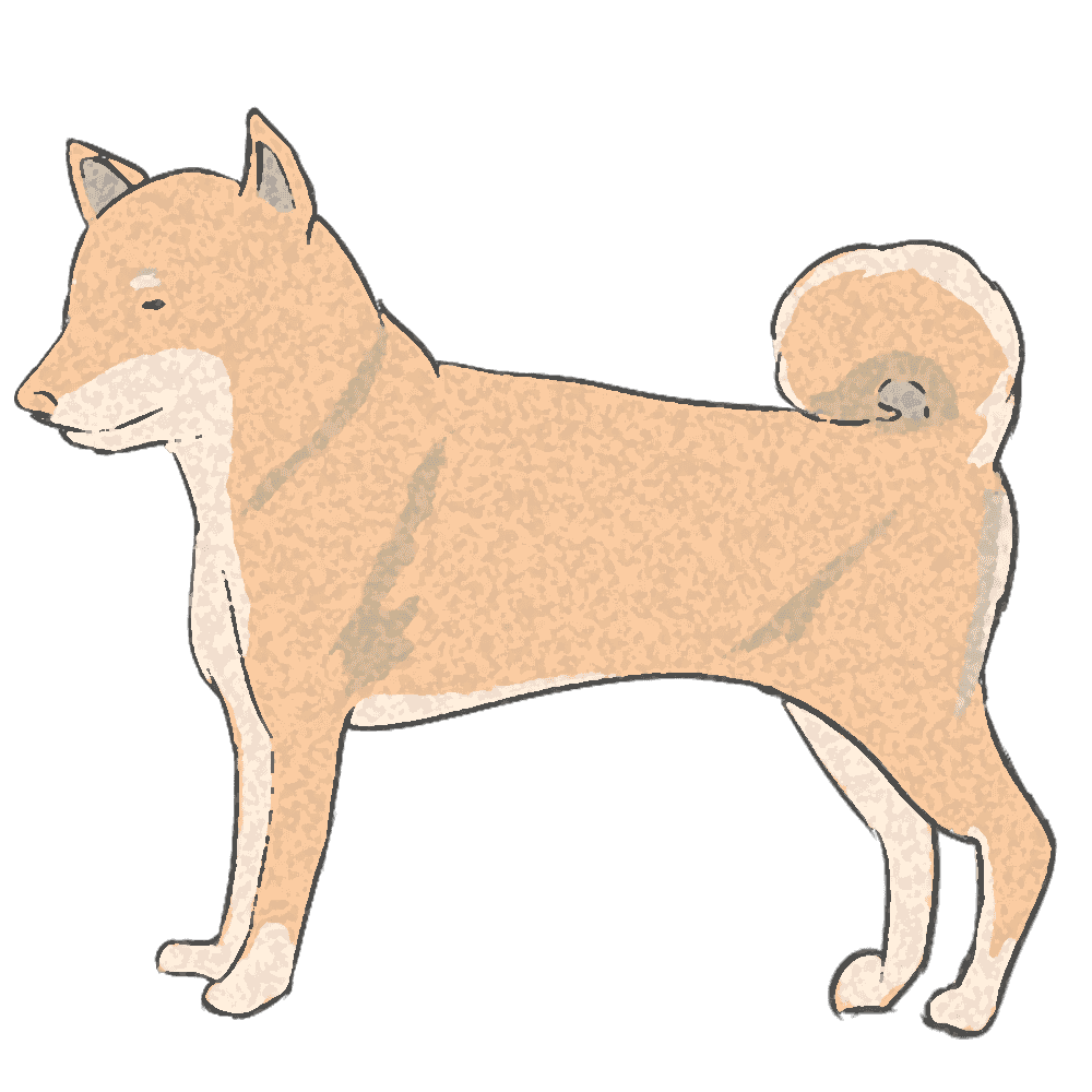スポンジ調の柴犬イラスト