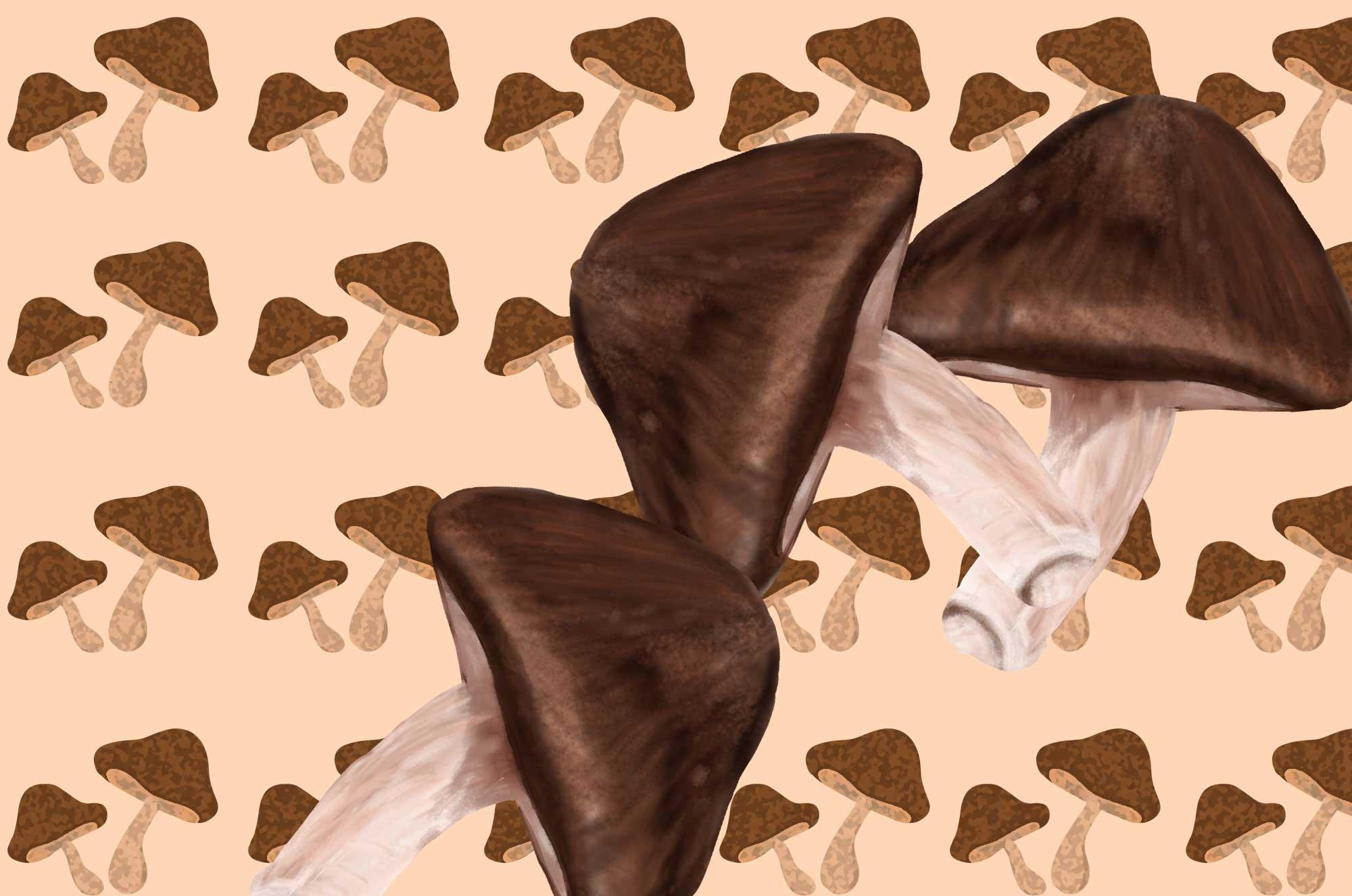 しいたけのイラスト | リアル・可愛いタッチの無料素材