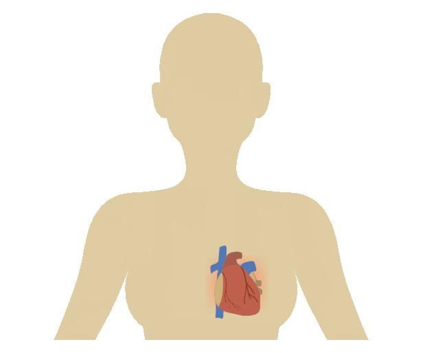 シンプルな心臓のイラスト