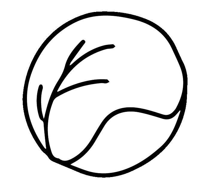 キャベツの白黒イラスト