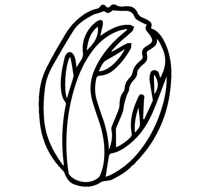 白菜の白黒イラスト
