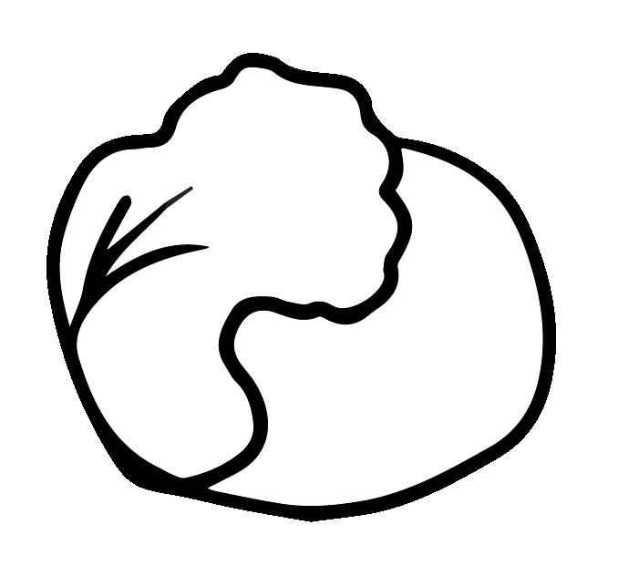 レタスの白黒イラスト