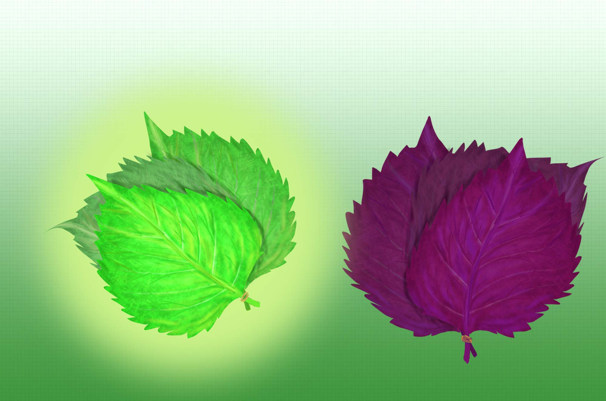 大葉としそのイラスト - 香る和風ハーブの無料素材