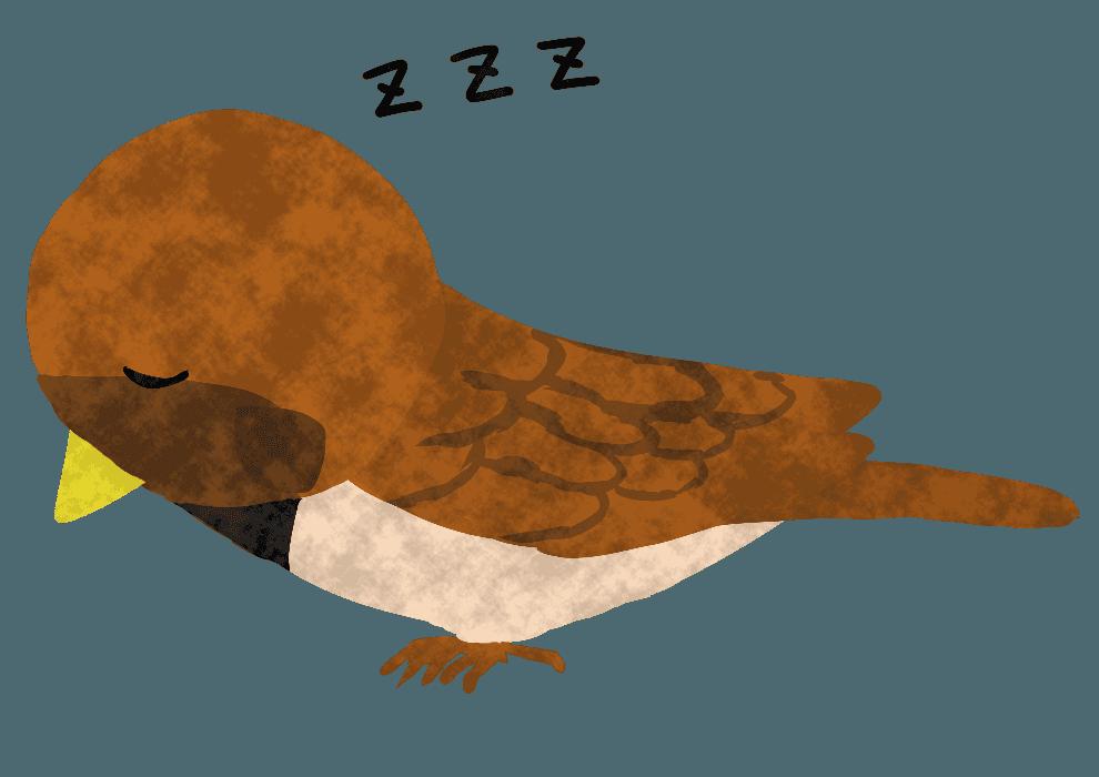 寝ているすずめイラスト