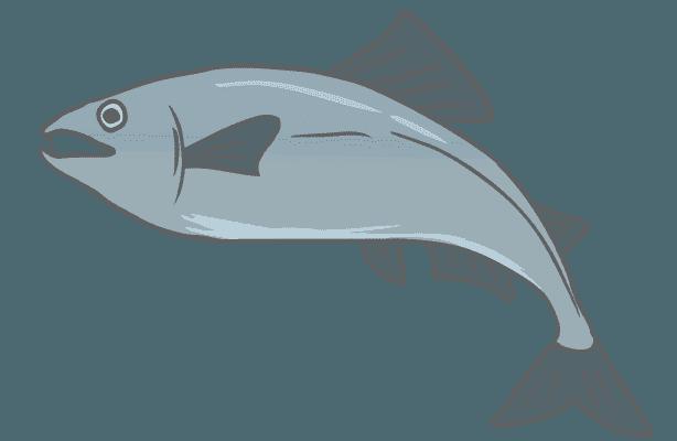 ジャンプする鮭のイラスト