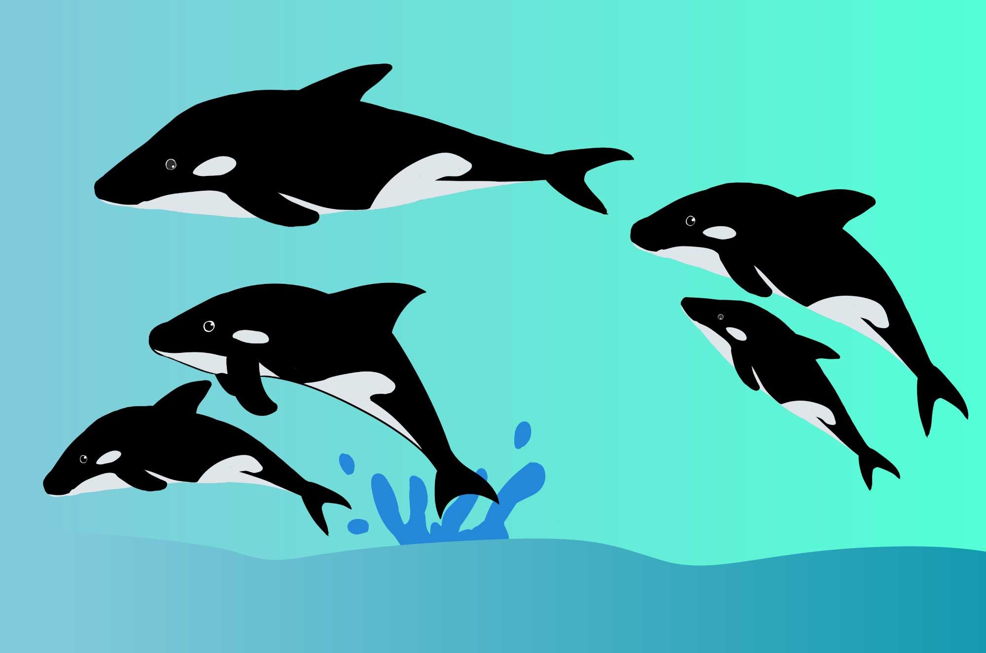 シャチの無料イラスト - 海のギャングの動物素材
