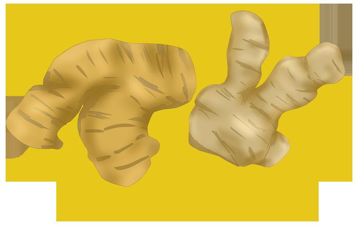 摩り下ろし前の生姜イメージ挿絵