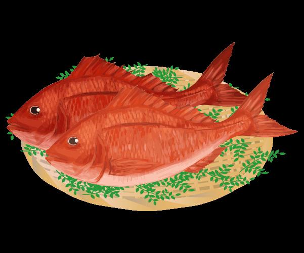 新鮮な鯛のイラスト