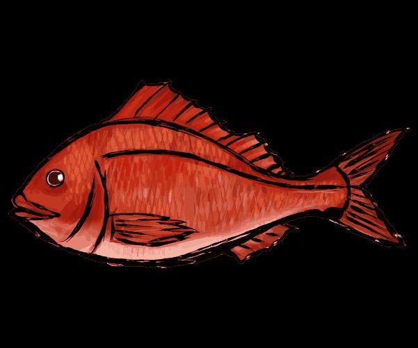 鯛の墨絵のイラスト