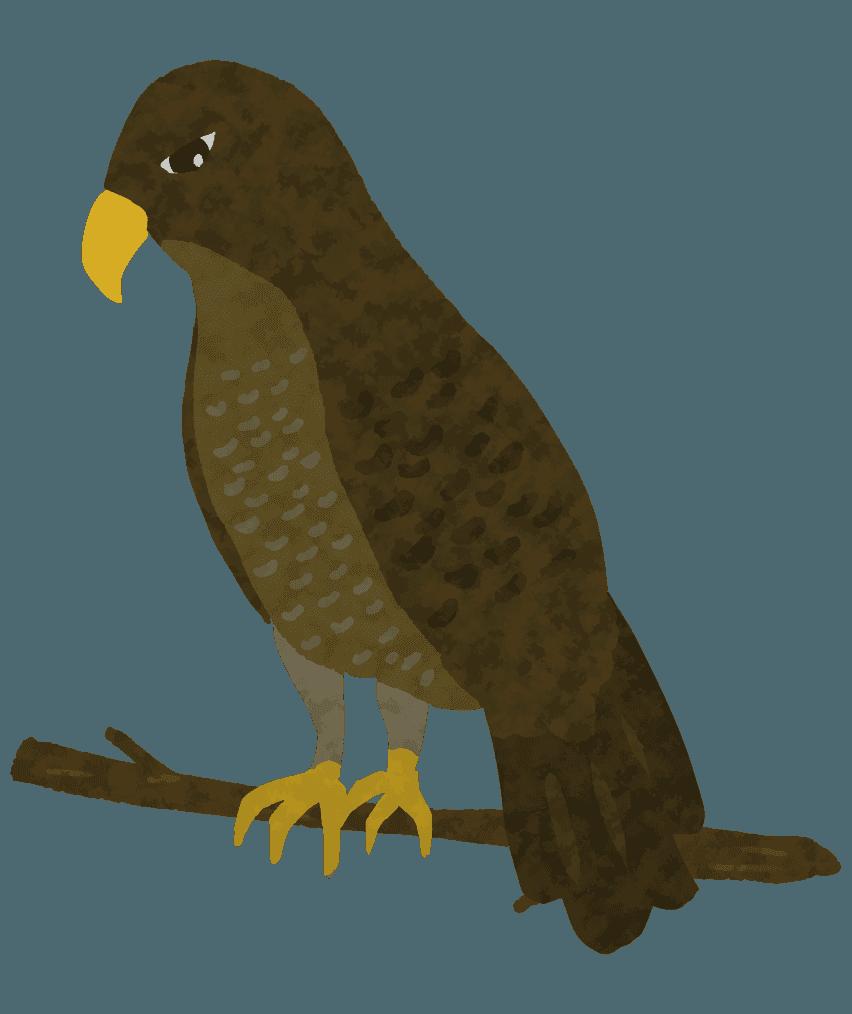 木に止まる可愛い鷹のイラスト