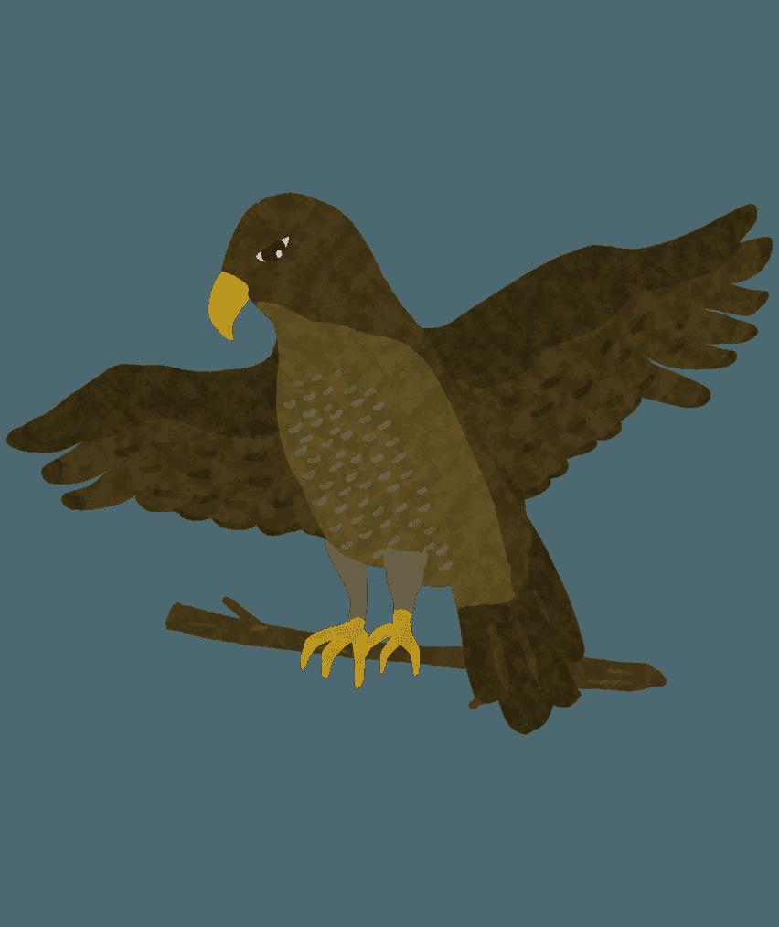 翼を広げる鷹のイラスト
