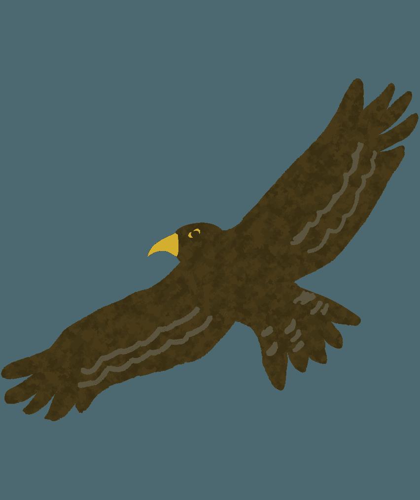 空高く飛ぶ鷹のイラスト