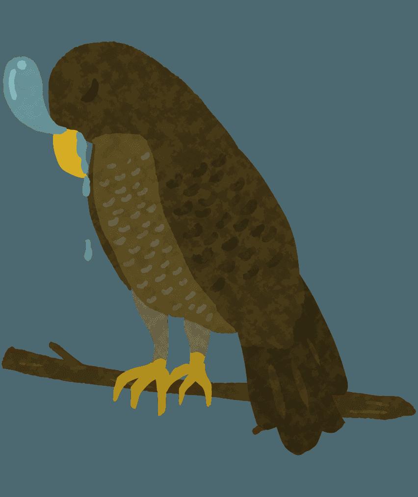 居眠りをしてよだれを垂らす鷹のイラスト