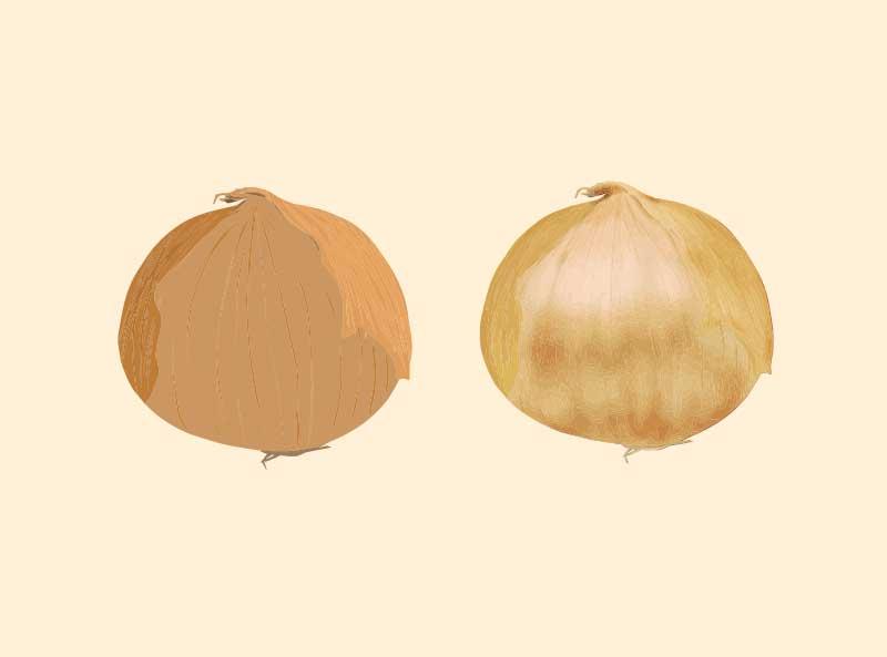 玉ねぎのベクターイラスト
