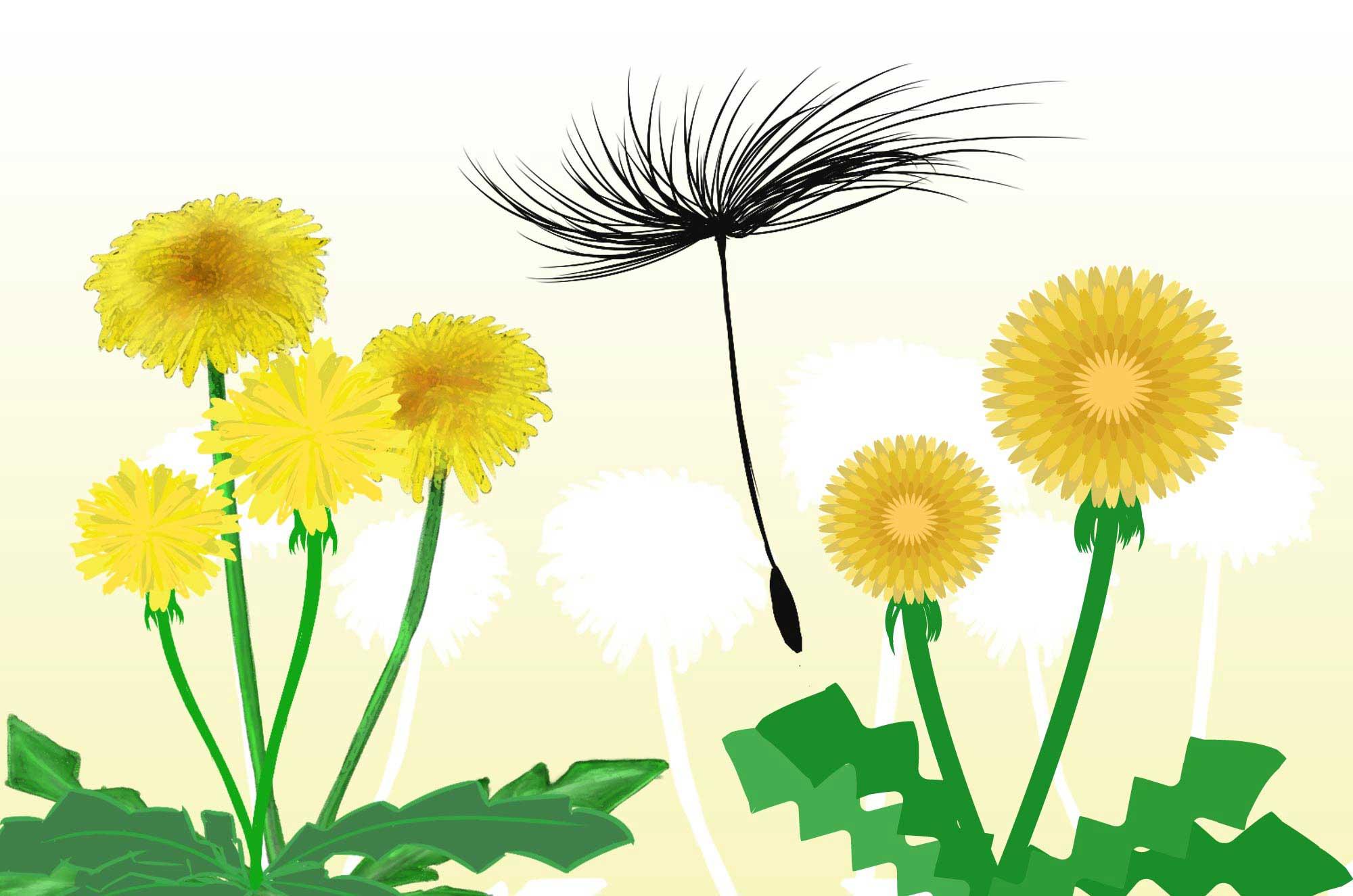たんぽぽイラスト - 可愛い種と花の無料素材集