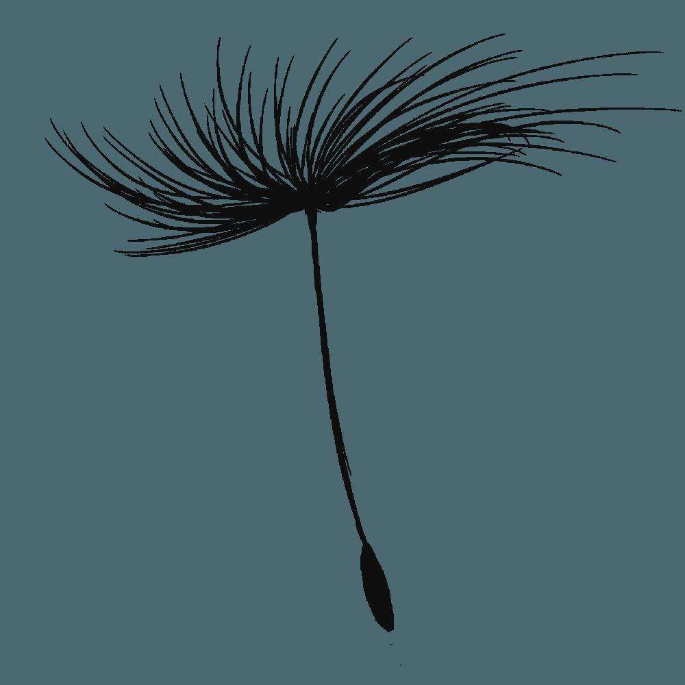 たんぽぽの種のシルエット