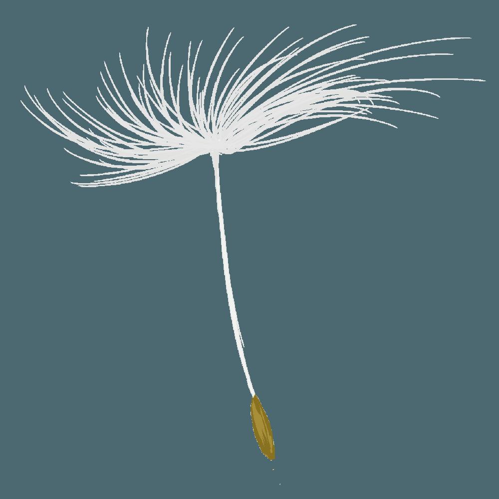 可愛いたんぽぽの種イラスト