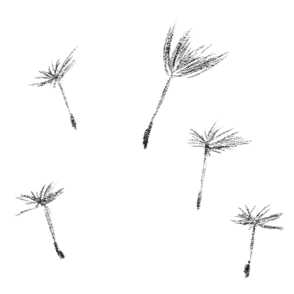鉛筆で描いたたんぽぽの種のイラスト
