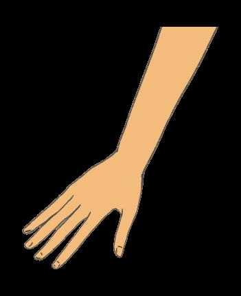 手のイラスト2