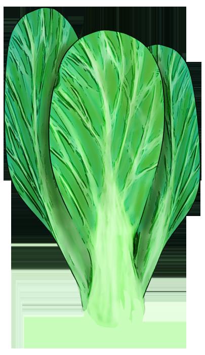 ちょっぴりリアルなチンゲン菜の水彩イラスト