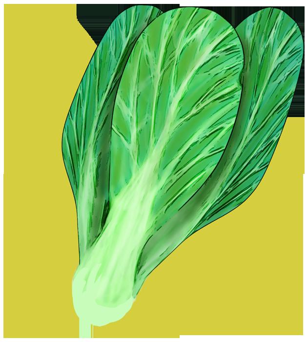 絵にぴったりなチンゲン菜のイラスト
