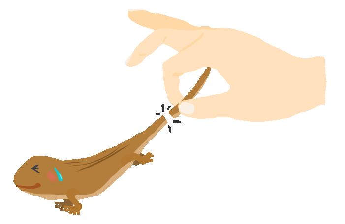 トカゲのしっぽ切りのイラスト
