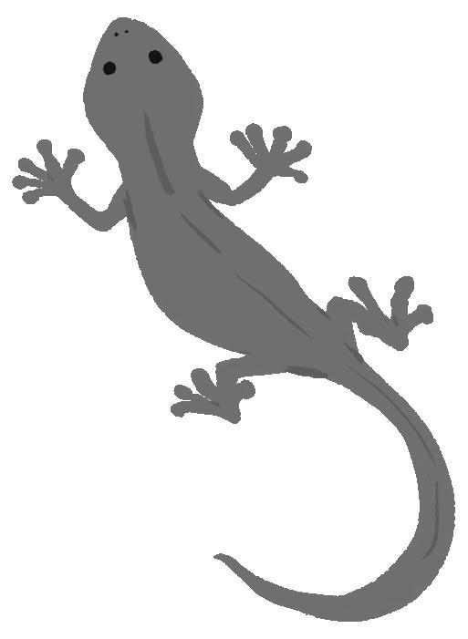 トカゲの白黒イラス