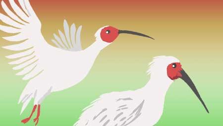 トキのイラスト - 日本では野生絶滅した鳥のフリー素材