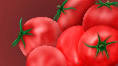 トマトイラスト無料素材集☆栽培・苗〜植え付けも