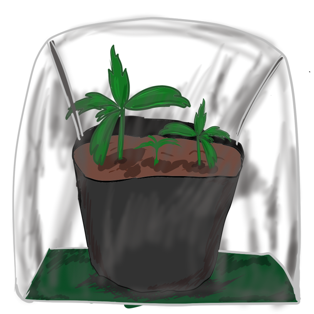 ミニ温室とトマト