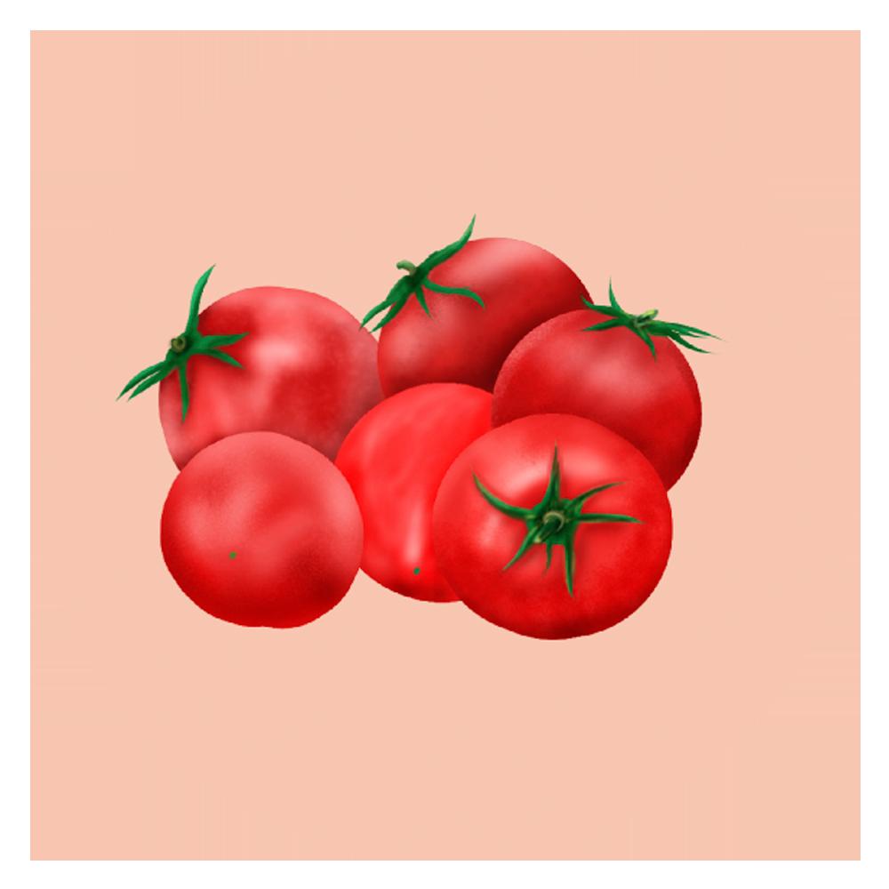 トマトイラスト挿絵