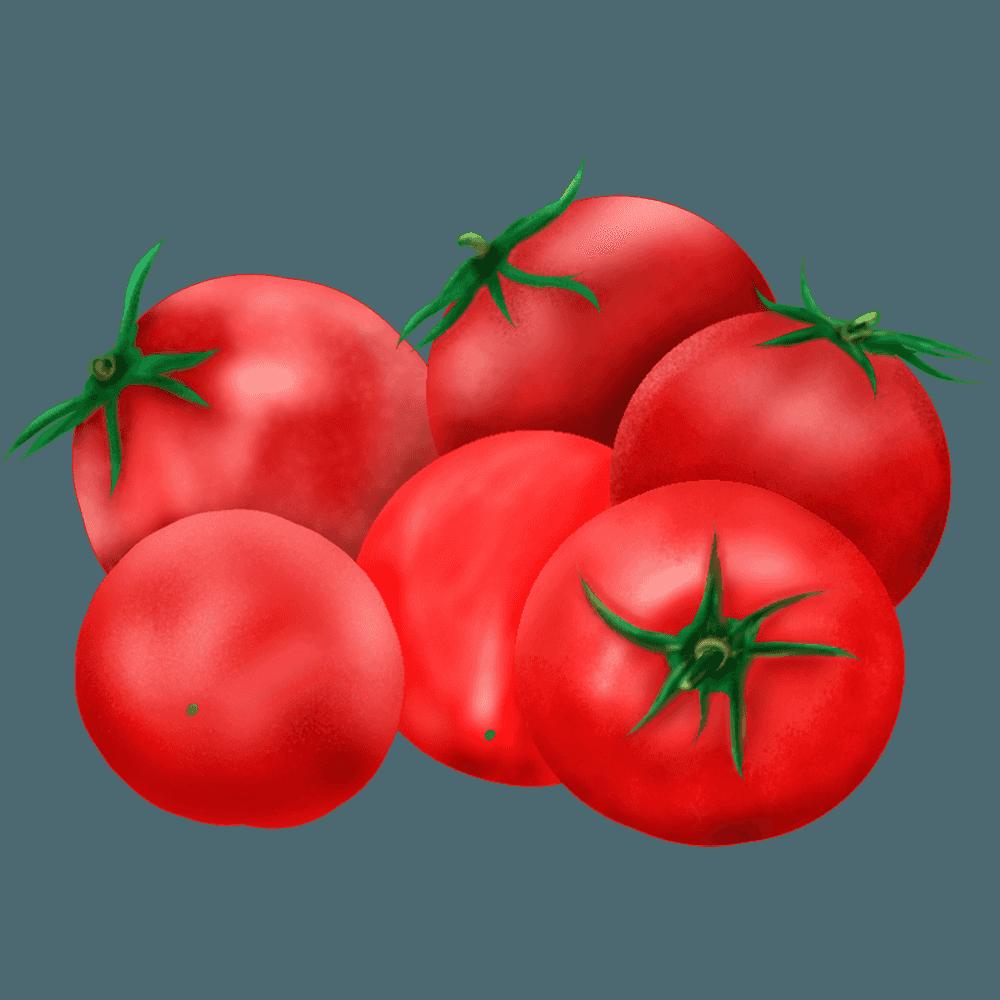 リアルなミニトマトのイラスト