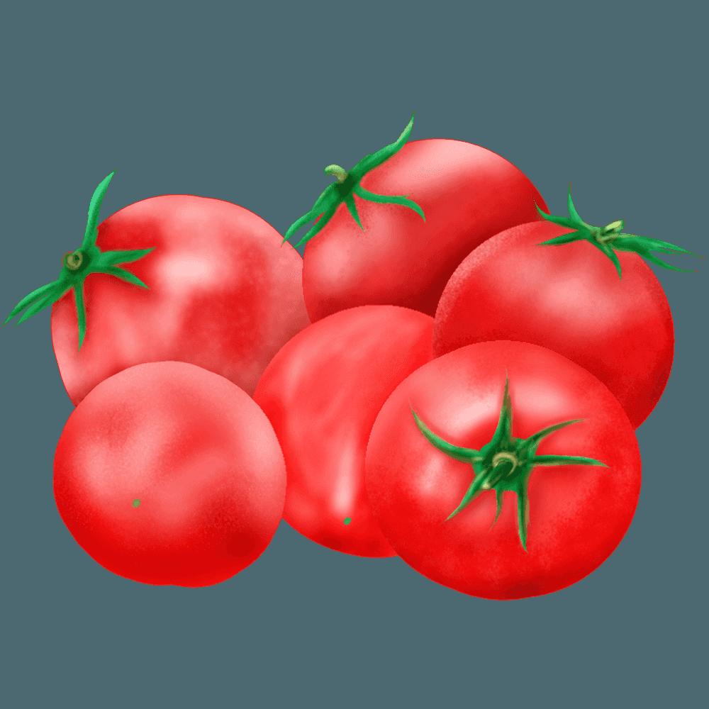 リアルなプチトマトのイラスト