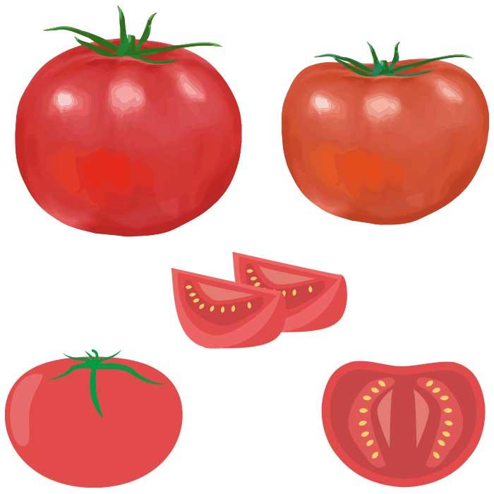 トマトのベクターイラストセット