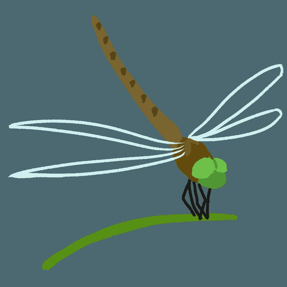 草にとまるトンボイラスト