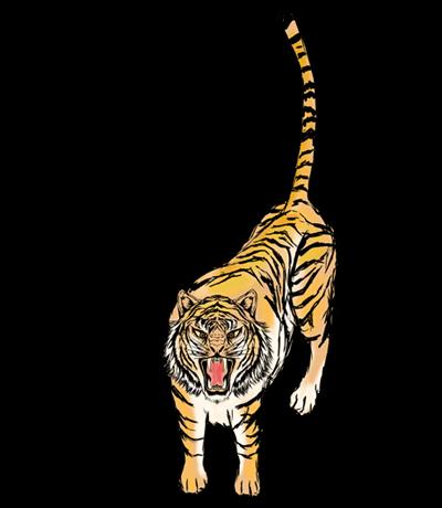 リアルな虎(全身)のイラスト
