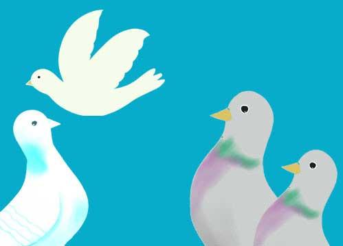 鳩のイラスト(背景あり挿絵)