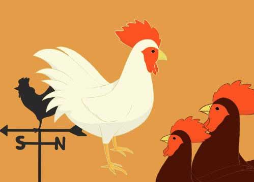 鶏のイラスト(背景つき挿絵)