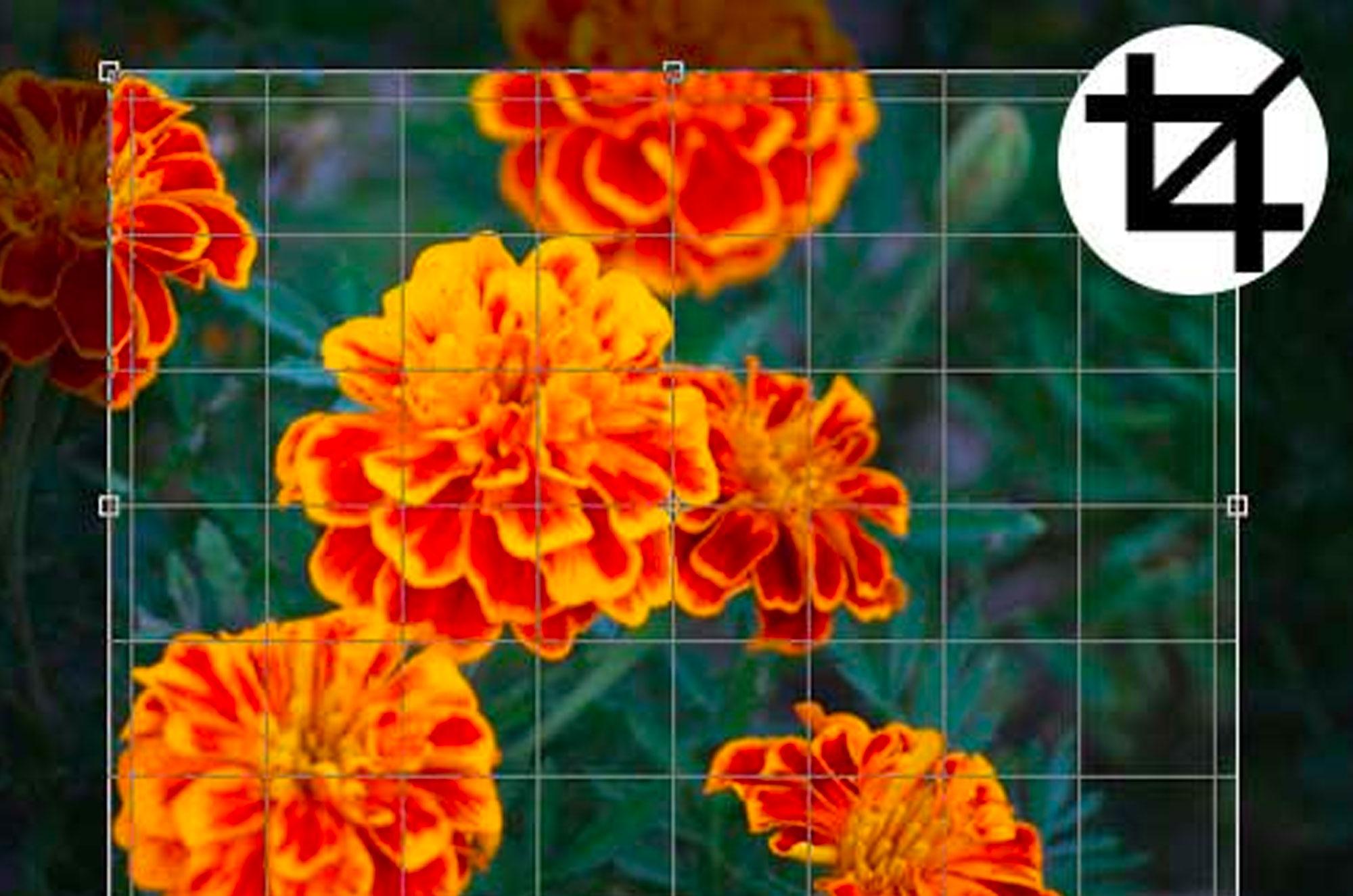 photoshopの画像のトリミングとツールの操作方法