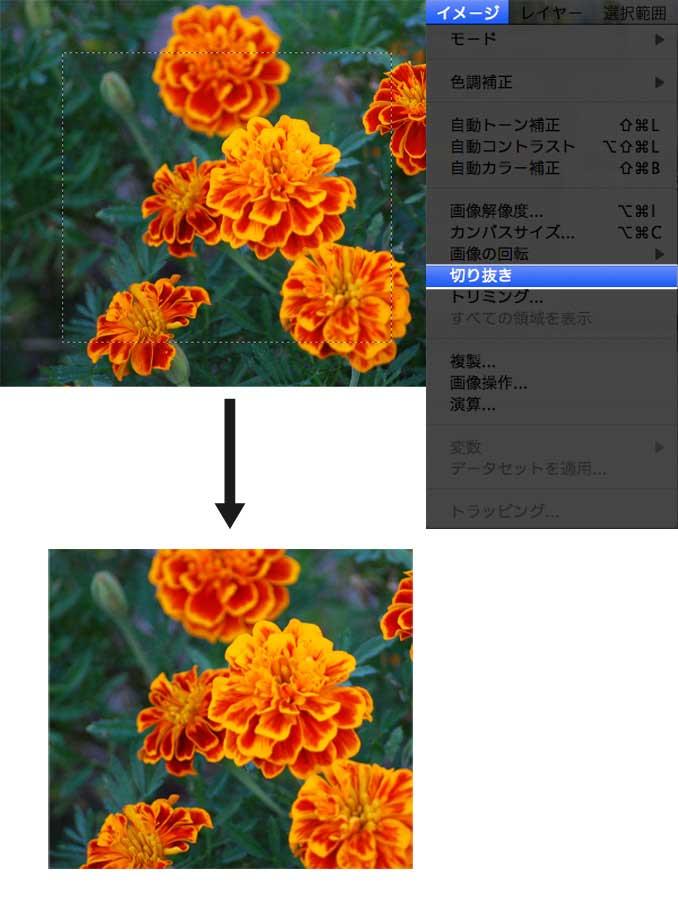 選択範囲からトリミングサイズを決定し、トリミングした花の写真