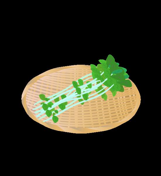 ザルにのった豆苗のイラスト