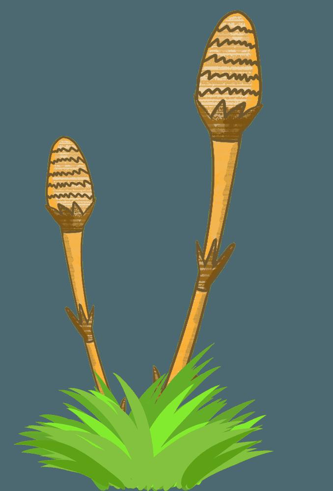 草に生える2本のつくしのイラスト