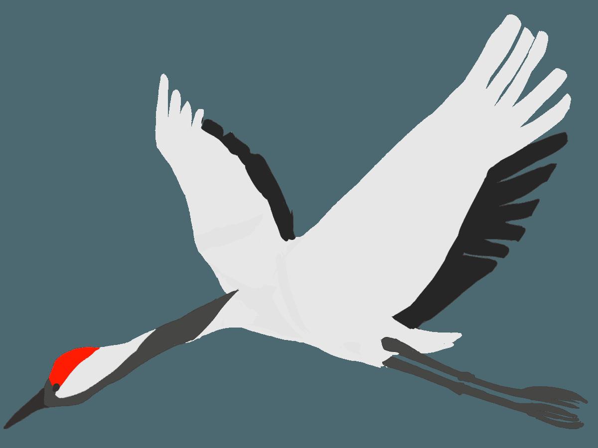 下を向きながら飛ぶ鶴イラスト