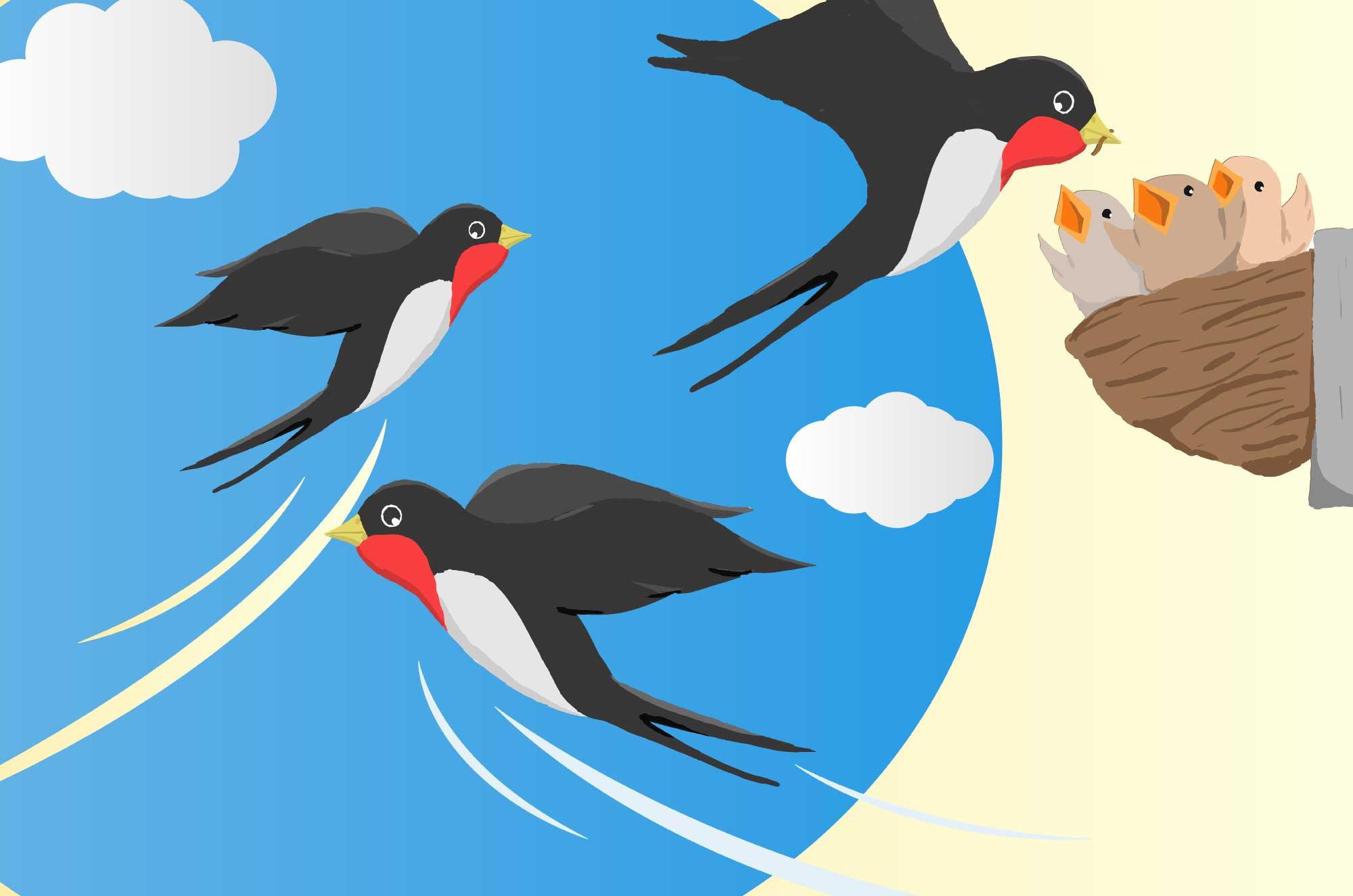 可愛いツバメのイラスト - 巣作りとヒナ・空飛ぶ親鳥